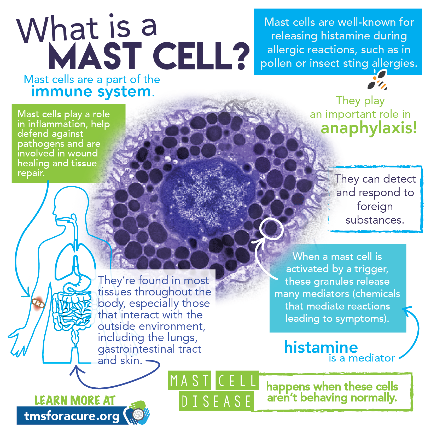 What is MCAS? | NAUGHTYLITTLEMASTCELLS